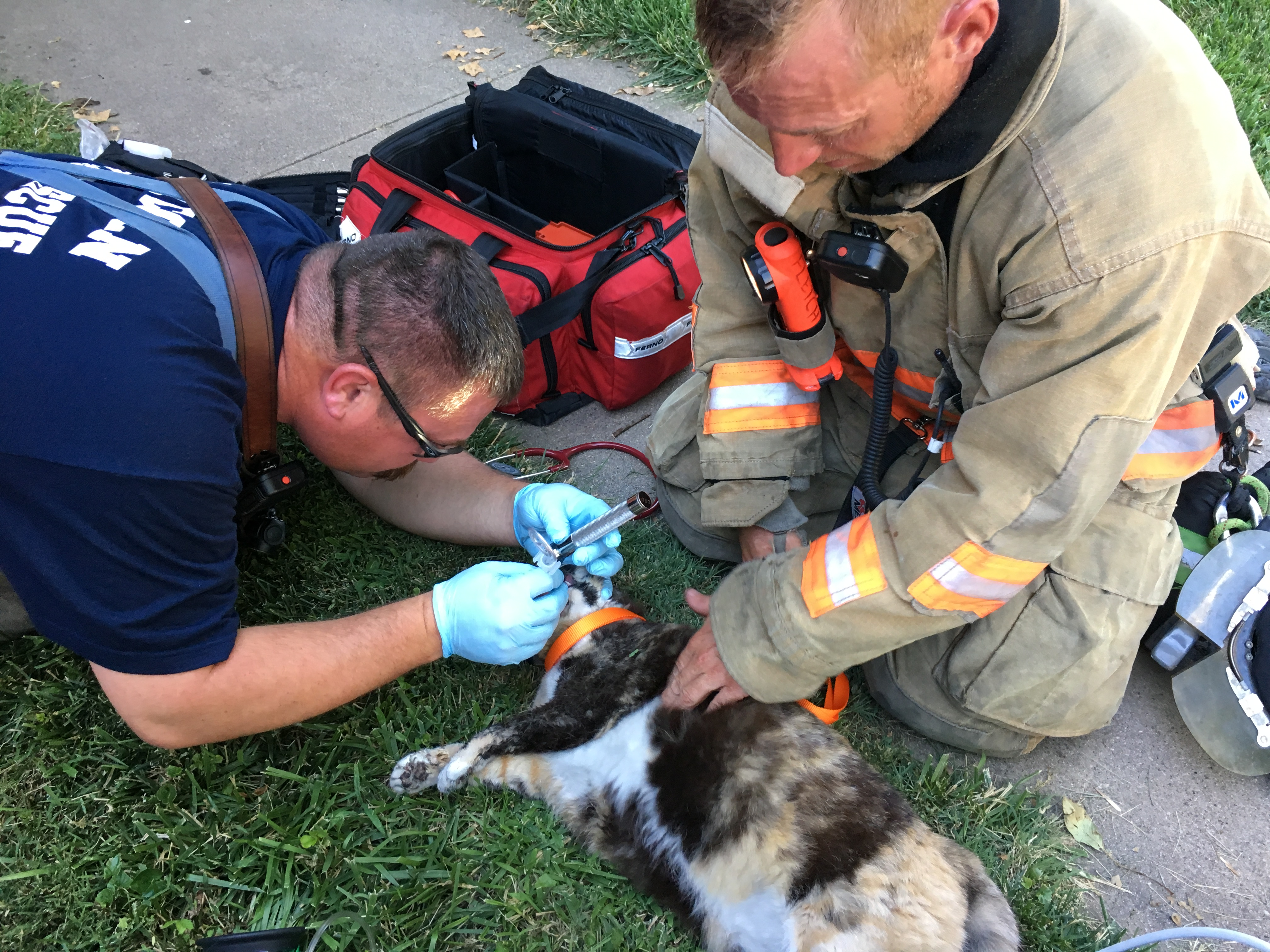 Firefighters try to revive a pet cat they retreived from a house fire.