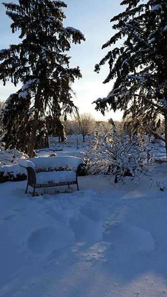 The bench and evergreens of the upper garden after a blanket of snow.